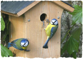 1 pfma_national nest_box_week
